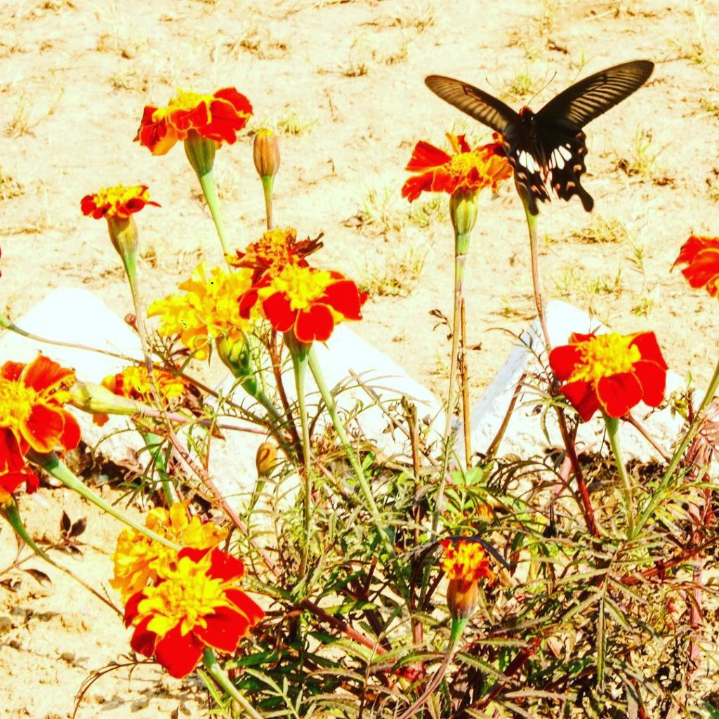 happiness is like a butterfly the more you chase ithellip